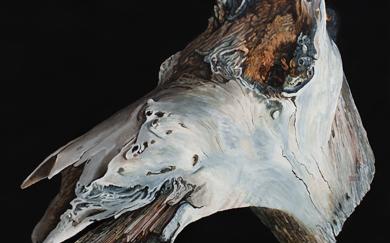 Bestiary VI · Horse's head · 46x55 cms.