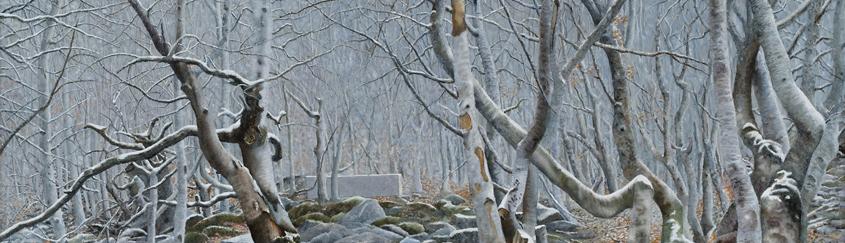 Winter Forrest (30 x 70 cms.)