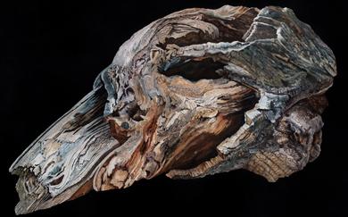 Bestiary IX · Dog's Head