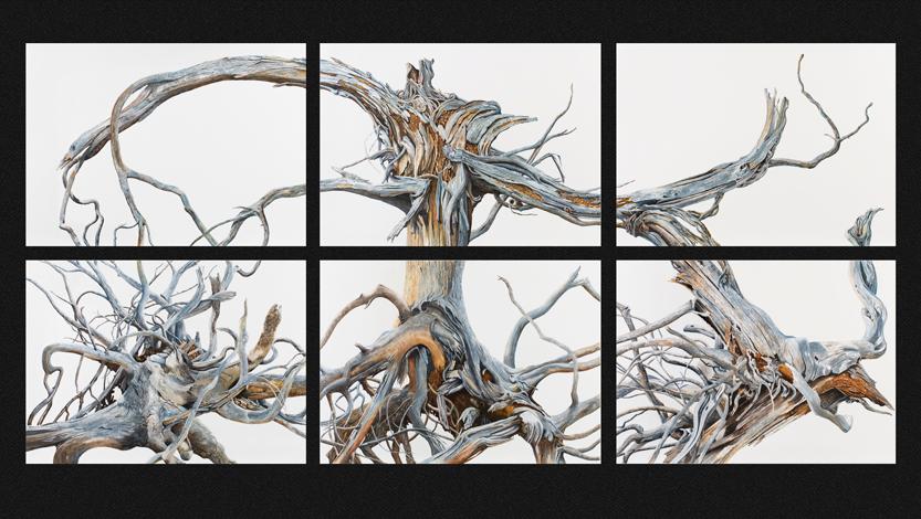 Silos' Sextet · Six pieces (110 x 240 cms. · 53 x 73 cms. each)